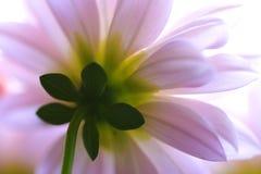 Un macro colpo di un bello fiore fotografia stock libera da diritti