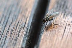 Un macro tir de mouche Photos libres de droits
