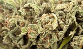 Fond de cannabis Image libre de droits