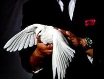 Un mago y una paloma Foto de archivo