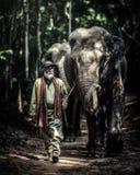 Un mahout che cammina con il suo elefante per ritornare a casa dopo il bagno immagine stock