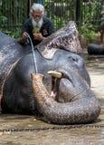 Un mahout dà al suo elefante una bevanda dell'acqua a Kandy nello Sri Lanka Fotografie Stock