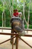 Un mahout responsable de pasajeros que esperan del elefante para en Siam Safari Elephant Camp en Phuket, Tailandia Foto de archivo