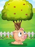 Un maiale sotto l'albero Fotografia Stock Libera da Diritti