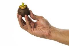 Un mangostano fresco della tenuta una della mano isolato su fondo bianco fotografia stock libera da diritti