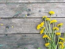 Un manojo de dientes de león amarillos en un viejo fondo de madera oscuro con el espacio vacío para el texto Imágenes de archivo libres de regalías