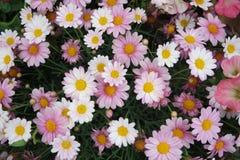 Un manojo de flores Foto de archivo libre de regalías