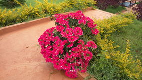 Un manojo de flores Fotografía de archivo libre de regalías