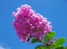 Un manojo de flores, rosa del color, contra un cielo azul imagen de archivo