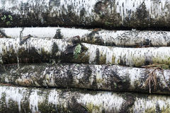 Un manojo de madera de construcción del abedul imagen de archivo