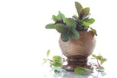 Un manojo de menta fresca de la primavera en un florero de madera Imagenes de archivo