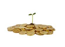 Un manojo de monedas con un pequeño tallo de la planta que sale de él Foto de archivo libre de regalías