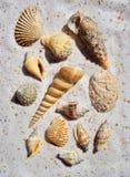 Un manojo de shelles del mar en la arena Imágenes de archivo libres de regalías