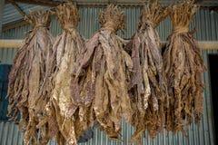 Un manojo de tabacos secos en Dacca, manikganj, Bangladesh Imágenes de archivo libres de regalías