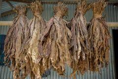 Un manojo de tabacos secos en Dacca, manikganj, Bangladesh Foto de archivo