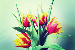 Un manojo de tulipanes rojos y amarillos con efecto retro y del grunge Fotografía de archivo libre de regalías