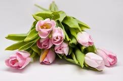 Tulipes rosados Imagen de archivo libre de regalías
