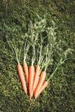 Un manojo de verde de las zanahorias se va en hierba verde el día soleado Cierre para arriba Visión superior Imágenes de archivo libres de regalías