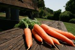 Un manojo de verde de las zanahorias se va en hierba verde el día soleado Cierre para arriba Visión superior Imagenes de archivo
