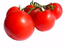 Un manojo del tomate    imagen de archivo libre de regalías