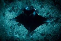 Un Manta Ray au point de manta images libres de droits