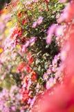 Un mar de flores Foto de archivo libre de regalías