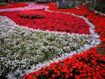 Un mar de la flor en el parque de la planta foto de archivo libre de regalías
