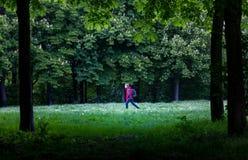 Un marcheur dans une belle forêt images libres de droits