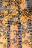 Un marco de la colmena cubierto con las abejas ocupadas Imágenes de archivo libres de regalías