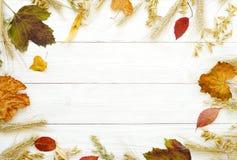 Un marco de las hojas de otoño Fotografía de archivo