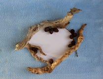 Un marco del corazón de los conos del alerce y de los palillos secos foto de archivo