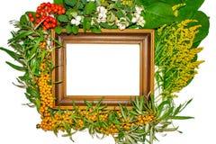 Un marco para la pintada y fotografías adornadas con la naturaleza stock de ilustración