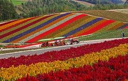 Un mare dei fiori fotografia stock libera da diritti