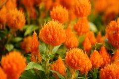 Un mare dei fiori fotografie stock