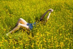Un mare dei Wildflowers gialli Fotografia Stock