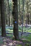 Un marqueur sur un arbre indiquant l'itinéraire de la manière de St James par le plateau de Ferschweiler photographie stock libre de droits