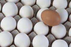 Un marrón en los huevos blancos, minoría visible del huevo Fotografía de archivo