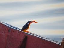 Un martín pescador Imagen de archivo libre de regalías