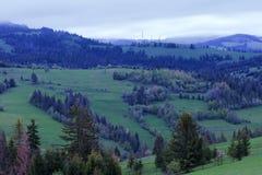 Un matin bleu frais dans les montagnes carpathiennes Image stock