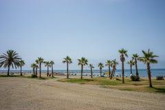 Un mazzo collettivo di palme alla spiaggia di Malagueta a Malaga, S Immagine Stock
