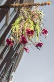 Un mazzo dei fiori che appendono fuori fotografie stock libere da diritti