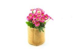 Un mazzo dei fiori dentellare Fotografia Stock Libera da Diritti