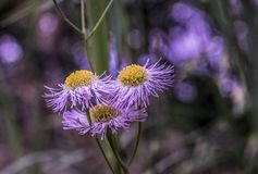 Un mazzo dei fiori nel giardino Immagine Stock