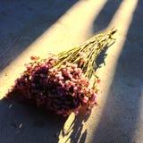 Un mazzo dei fiori porpora sulla terra Immagine Stock Libera da Diritti