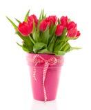 Un mazzo dei tulipani variopinti rossi Fotografia Stock