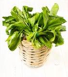 Un mazzo dei verdi freschi in un canestro di vimini della ciotola su legno bianco Immagini Stock