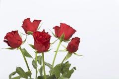 Un mazzo del color scarlatto delle rose Cinque fiori Su una priorità bassa bianca fotografia stock