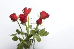 Un mazzo del color scarlatto delle rose in un vaso di vetro Cinque fiori Su una priorità bassa bianca fotografia stock