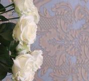 Un mazzo delle rose bianche fotografia stock