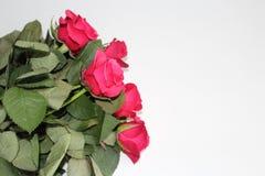 Un mazzo delle rose rosse Immagini Stock